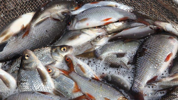 Update: ontheffing zegenvisserij weer ingetrokken