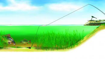 Oplossing voor karpervissers