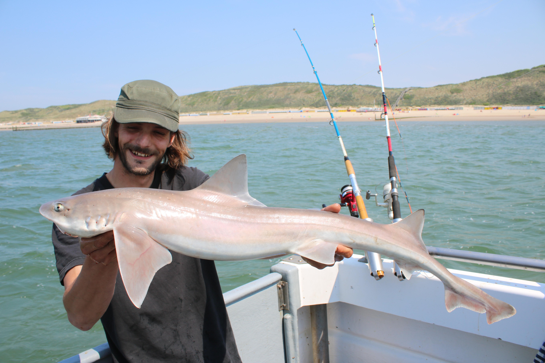 Zeevissen op haai in Nederland gericht op grote