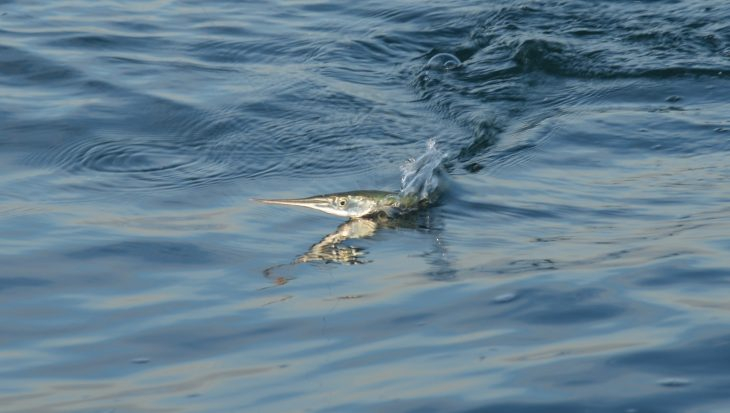 Zeeuwse gepen