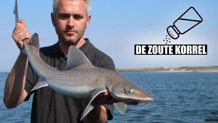 Vissen op Nederlandse haai