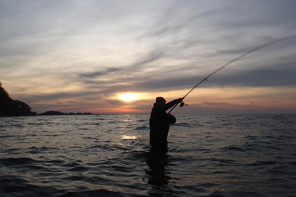 Een supercombinatie dus en reden genoeg om deze locatie op te nemen om gericht op zeeforel te vissen en bijkans dus ook op snoek.