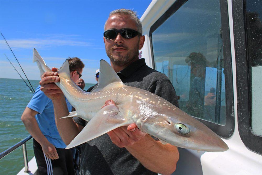 Vanaf het moment dat Sharkatag in 2011 van start ging, zijn 3.645 haaien door schippers van hengelcharters voorzien van een merkje.