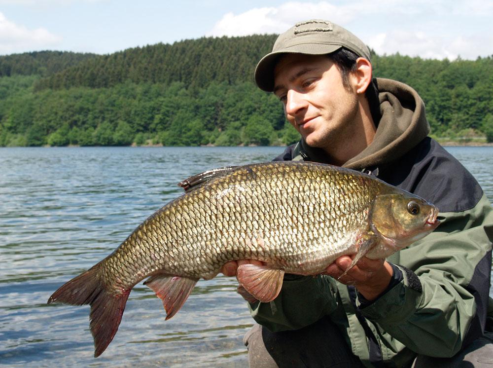 Dit soort kanjers van windes kun je vangen in afgesloten meren. De vis kan er vrijwel ongestoord uitgroeien omdat er bijna niemand gericht op vist.