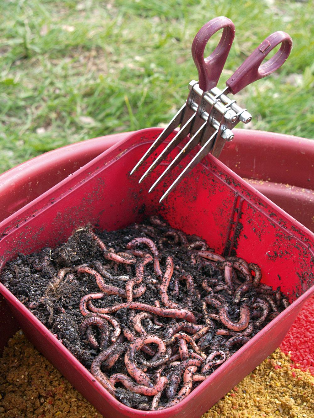 Om de windes een zo afwisselend mogelijke kost aan te bieden, horen maden (boven) en versnipperde wormen (onder) in het lokvoer.1