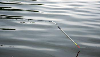 De swingtip is wellicht de meest gevoelige beetregistratie voor wie op stilstaand water de witvis op de bodem belaagt.