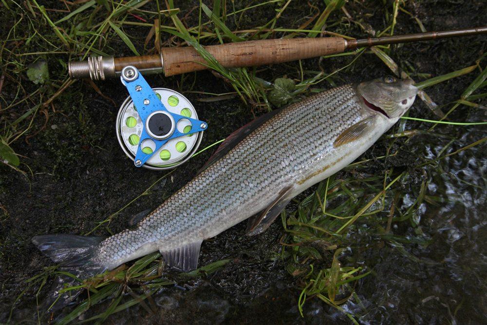 Een vlagzalm van de Wenne, een vis die vaak moeilijker te vangen is dan forel.