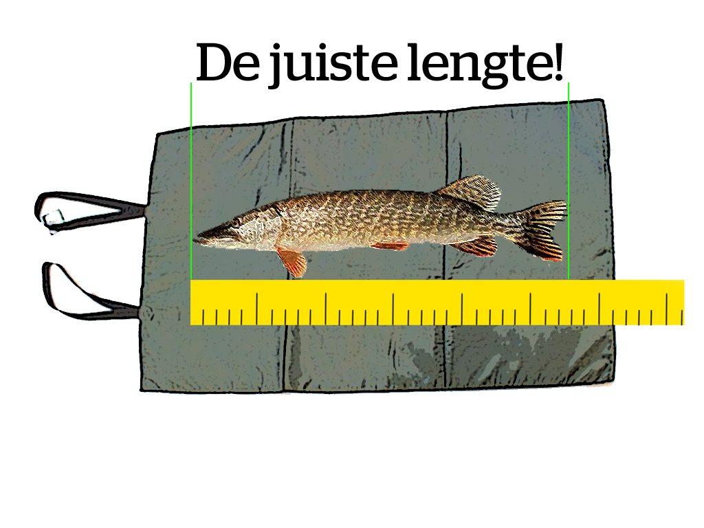 Record, vis, opmeten, meten,
