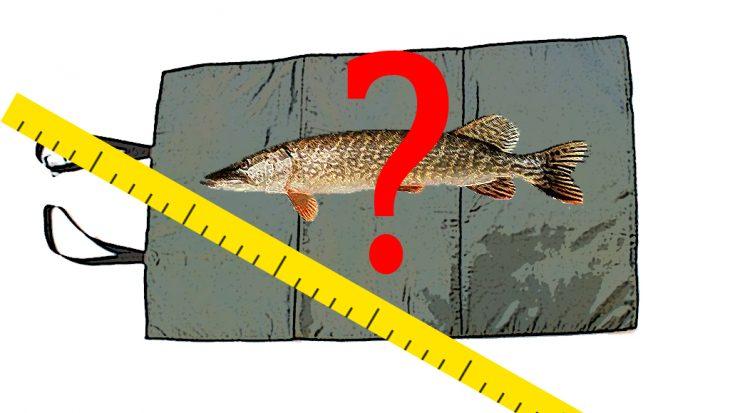 Hoe meet je grote vis?