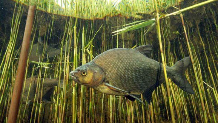 Unieke samenwerking sport- en beroepsvisserij voor een betere visstand op Zuidelijke Randmeren