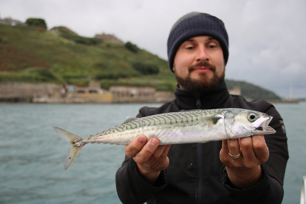 Makrelen met lengtes boven de 40 centimeter.