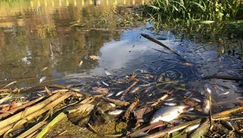 Over een traject van ongeveer vier kilometer (tot net voor Almen) zijn sinds maandag veel dode vissen en vissen in nood aangetroffen.