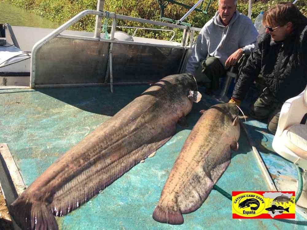 De laatste dag vingen ze nog drie meervallen met als grootste een vis van 2,36 meter. Na een uitbundig afscheid moesten ze weer naar huis, ze komen zeker terug dit was super!