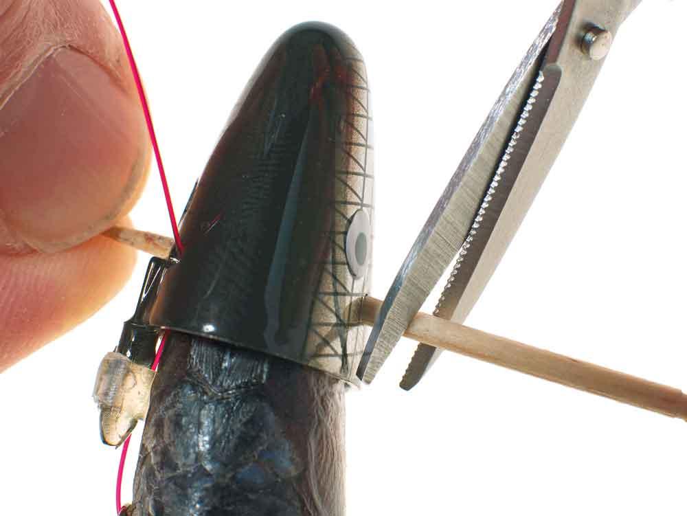 Deze tandenstoker wordt door de in de baitholder aangebrachte gaten gestoken…