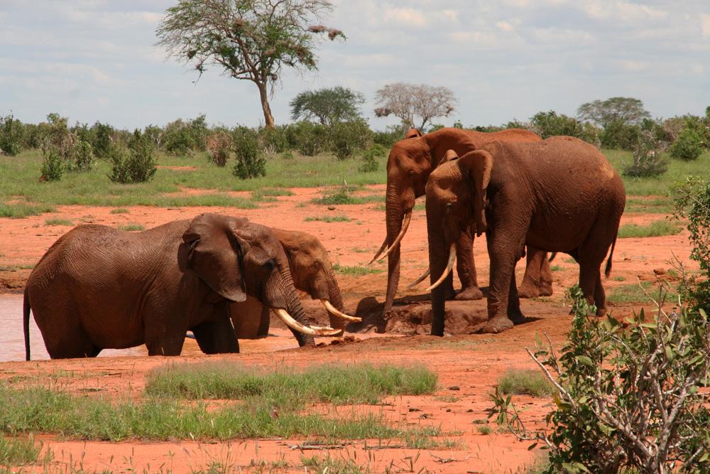 Bij aankomst organiseert Bullshark altijd een safaritocht om een beetje tot rust te komen en als voorbereiding voor de visserij op zee.