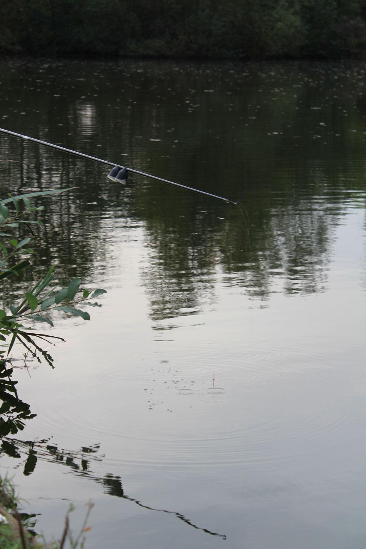 Deegvissen