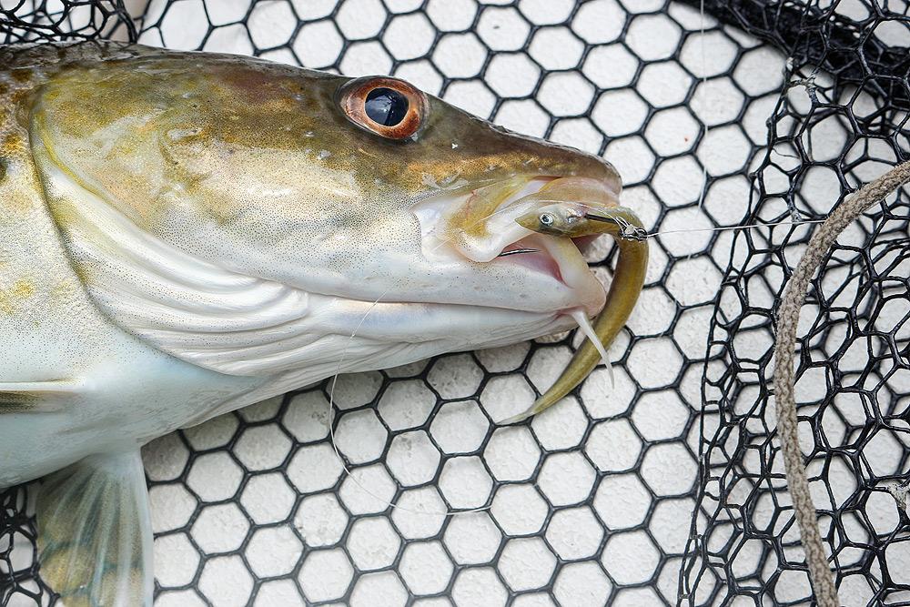 zeevissen natuurlijk aas