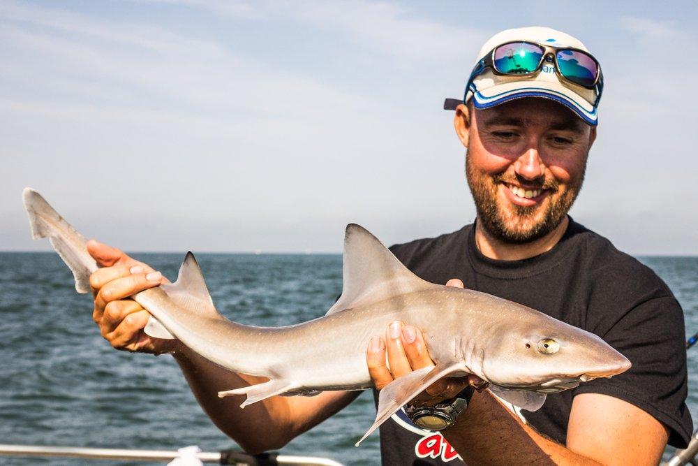 Een gevlekte gladde haai, gevangen tijdens Sharkatag 2018 onderzoek.