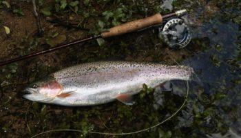 Open Deur dag Indiana Flyfishing.