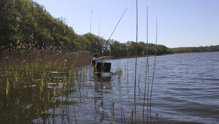 Waterkrachtcentrales en de gezondheid van vissen: hoe is de status