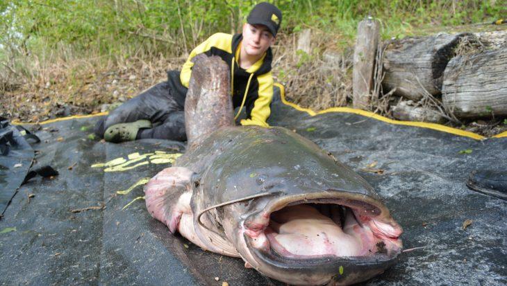 Onvermoeibaar meervalvissen