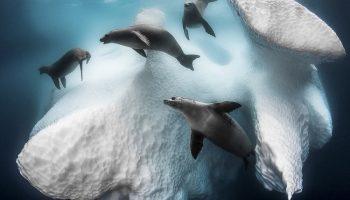 Greg Lecoeur werd met zijn foto 'Frozen Mobile Home' algemeen winnaar...