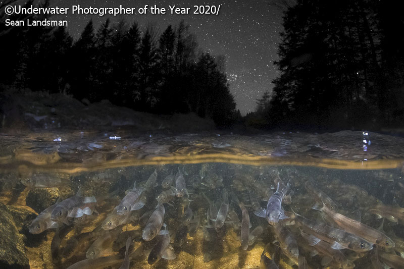 """'Beneath Starry Skies' - Sean Landsman: """"The rainbow smelt is an anadromous species of fish that spawn in freshwater and grow in saltwater. Smelt enter coastal North American rivers and streams in early spring as they head toward their spawning grounds. Unfortunately, dams can impede or outright block access to these areas. This species' movement patterns, their nutrient contribution to stream food webs, and the ability of fishways to allow smelt access to habitats above dams was the focus of my PhD research. Smelt tagged with small microchips also revealed that their upstream movements often occur at night, which this image accurately represents. It is a double exposure made in-camera and taken at the same time and place. I was inspired by Audun Rikardsen's incredible portfolio, including many of his split-level double exposure images. This image has significant personal meaning as it embodies years of research during my PhD and many milestones in between."""""""