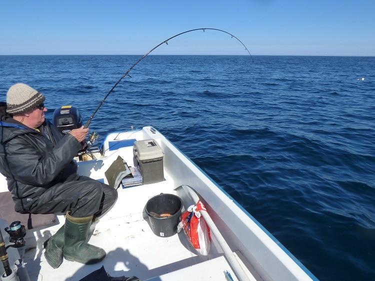 Reier aan het stoeien met een Noorse vis...