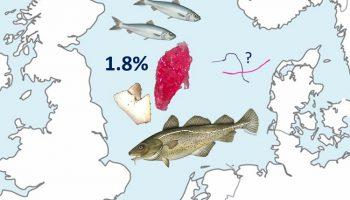 Van 4389 onderzochte Noordzeevissen van 15 soorten heeft 1,8 % ervan plastic in de maag.