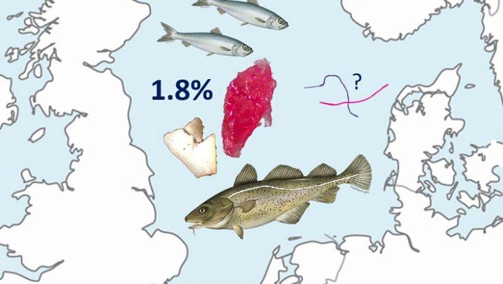Onderzoek: plastic in magen van Noordzeevissen valt mee
