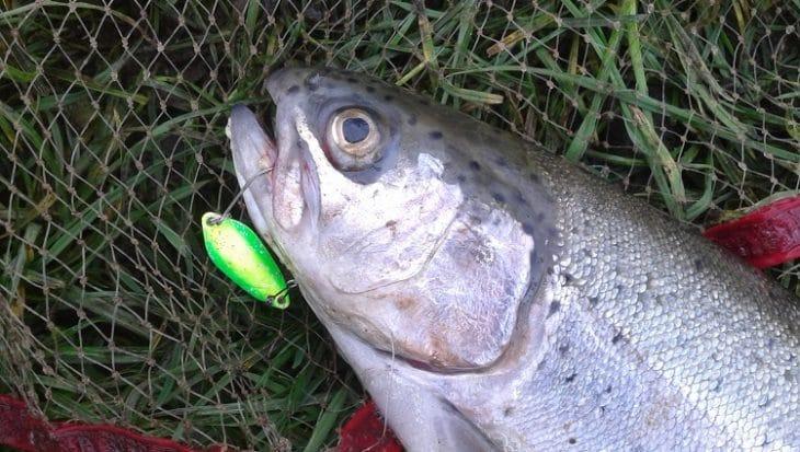 Spoons: Actief vissen op forel