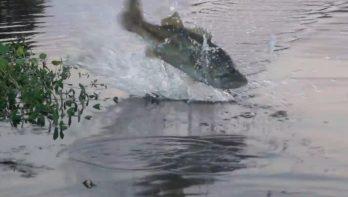 Baden langs viswater: op eigen risico