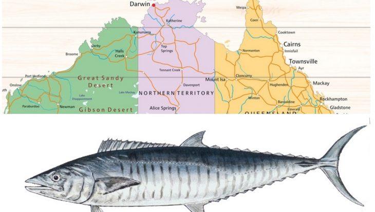 Spanish mackerel doodt sportvisser in Australië