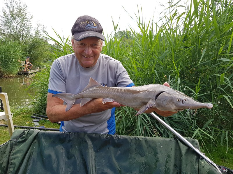 Vissen op steur Toms creek