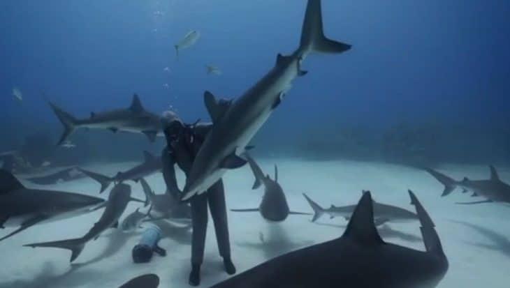 Haaien aaien met Cristina de 'Shark Dancer'