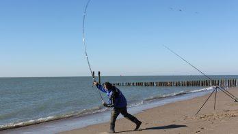 Dichter bij de horizon met geclipte zeevisonderlijnen