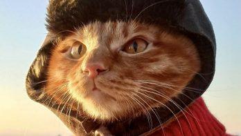 IJsvissen met Sergey en vismaat Simba de kat