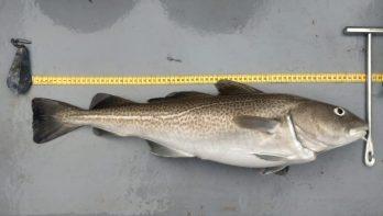 Blog: Van viswinter naar visvoorjaar in het Eems-Dollard gebied