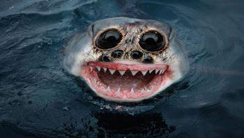 Opzienbaarlijke vis gevangen? Klim in de pen!