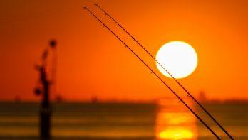 Zeevissen: over onderlijnen, haken, lood & aas