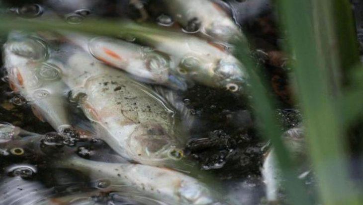 'Nieuwe' oorzaken vissterftes na zware regenval