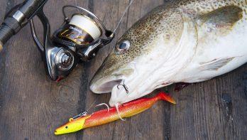 Øresund anno nu: kleinere vis, maar groot plezier