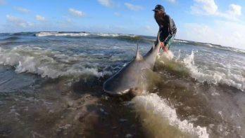 Haaivissen vanaf het strand in de USA: a way of life...